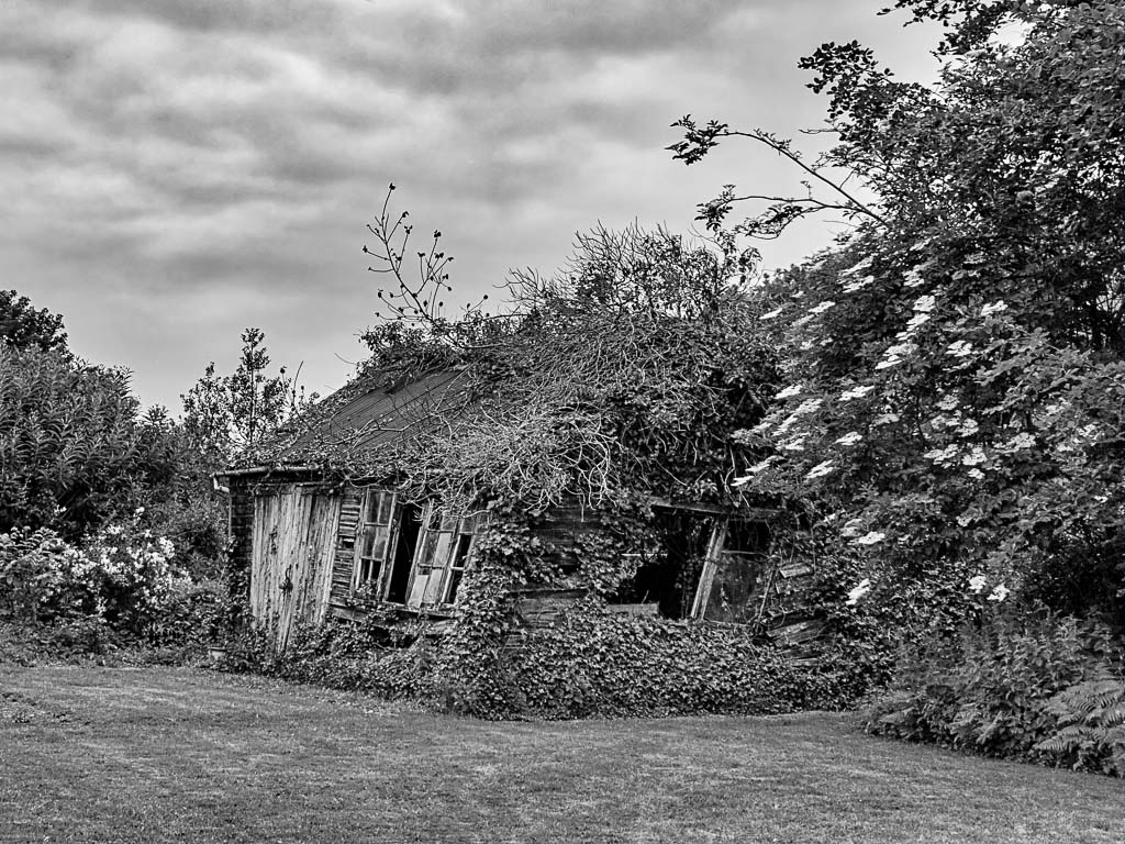 Old_Shed