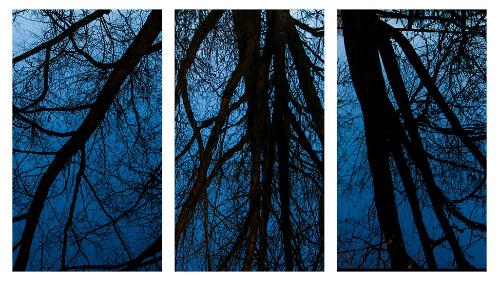 tree reflections triptych